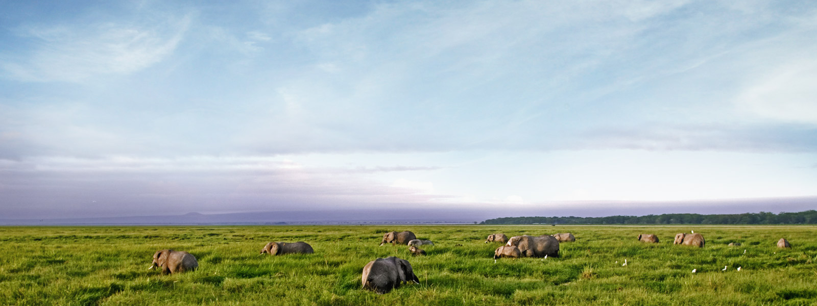 numerous elephants in a grass landscape