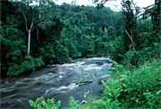 Tropical rain forest in the Western Congo Basin