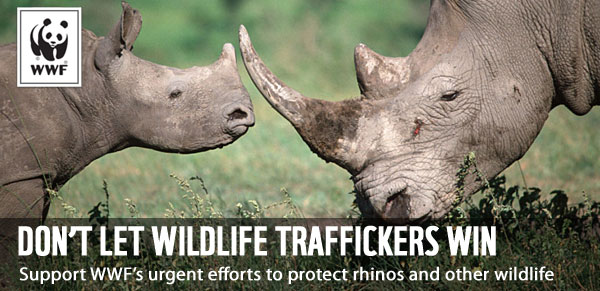 Don't Let Wildlife Traffickers Win - Support WWF's urgent efforts to protect rhinos and other wildlife